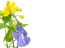 Gelbe purpurrote Blumen Lizenzfreie Stockfotografie