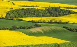 Gelbe Rapssamenfelder und grüner Weizen Stockfotografie