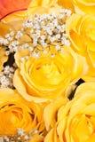 Gelbe Rose Lizenzfreie Stockfotografie