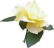 Gelbe Rose Lizenzfreies Stockbild