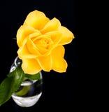 Gelbe Rose Stockbilder