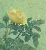 Gelbe Rose Vintage Style Foto Stockfotos