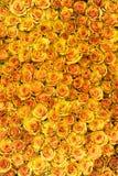 Gelbe Rosen Stockfotografie