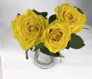 Gelbe Rosen auf einem weißen Hintergrund Lizenzfreie Stockfotos