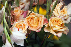 Gelbe Rosen verwelken Stockfotografie