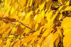 Gelbe Rotblätter auf einem Baum Lizenzfreies Stockfoto