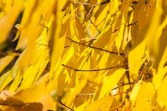 Gelbe Rotblätter auf einem Baum Lizenzfreie Stockbilder