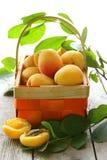 Gelbe süße reife Aprikosen (Pfirsiche) Stockfotografie