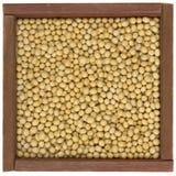Gelbe Sojabohnenölbohnen Lizenzfreies Stockfoto