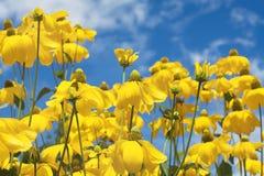 Gelbe Sommerblumen lizenzfreies stockbild