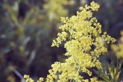 Gelbe Sommerblumen Stockfoto