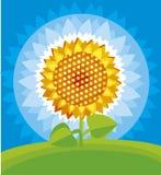Gelbe Sonnenblume lizenzfreie abbildung