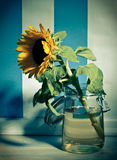 Gelbe Sonnenblume im Glas Stockfoto