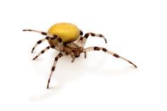Gelbe Spinne Stockbild