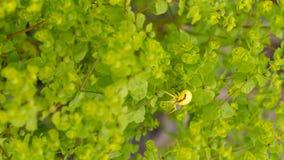 Gelbe Spinne Lizenzfreies Stockfoto