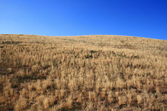Gelbe Steppe Stockbild