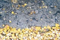 Gelbe Suppengrün-Blätter und Wasser Stockfotos