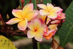 Gelbe thailändische Tempel Blumenkunst Stockbilder