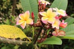 Gelbe thailändische Tempel Blumenkunst Stockfotos