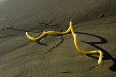 Gelbe Torsion an Land gewaschen stockfoto