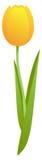 Gelbe Tulpe lizenzfreie abbildung