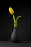 Gelbe Tulpe Lizenzfreies Stockbild