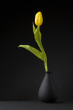 Gelbe Tulpe Lizenzfreies Stockfoto
