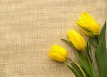 Gelbe Tulpe drei, die auf Sackleinen liegt Lizenzfreies Stockfoto