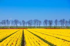 Gelbe Tulpe rudert mit Himmelhorizont und -bäumen Stockfoto