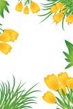 Gelbe Tulpekarte Stockfoto