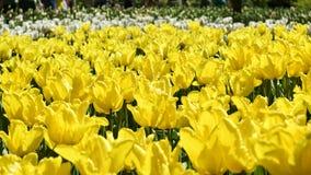 Gelbe tulpen vogelhaus und gemalte ostereier mit for Gelbe tafel