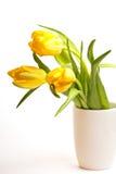 Gelbe Tulpen Stockbilder