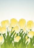 Gelbe Tulpen Stock Abbildung