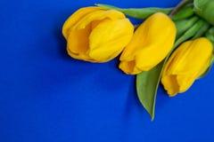 Gelbe Tulpen auf blauem backgroun Lizenzfreie Stockfotos