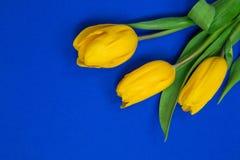 Gelbe Tulpen auf blauem backgroun Stockbild