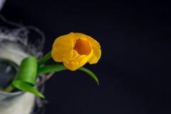 Gelbe Tulpen auf schwarzem Hintergrund Stockbild