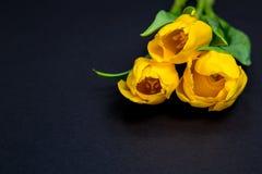 Gelbe Tulpen auf schwarzem Hintergrund Stockfotografie