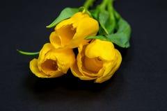 Gelbe Tulpen auf schwarzem Hintergrund Stockbilder