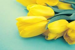 Gelbe Tulpen auf Türkishintergrund mit Raum für Mitteilung M Stockbild