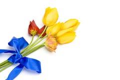 Gelbe Tulpen gebunden mit einem blauen Farbband stockbild