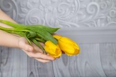 Gelbe Tulpen in seinen Händen Lizenzfreie Stockfotografie