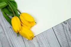Gelbe Tulpen und helles Papier Lizenzfreie Stockfotos