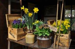 Gelbe und blaue Frühlingsblumen in den Töpfen Lizenzfreie Stockfotos