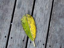 Gelbe und grüne Blätter Stockbilder