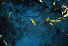 Gelbe und grüne Blätter auf Asphalt und Pfützen Lizenzfreies Stockfoto