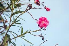 Gelbe und grüne Blätter und eine rosa Blume stockfotografie