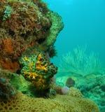 Gelbe und grüne Koralle Stockbilder