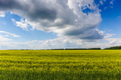 Gelbe und grüne Wiese in der Landseite mit hellem Wolkenhimmel, schöne Landwirtschaftslandschaft Lizenzfreie Stockbilder
