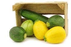 Gelbe und grüne Zucchini (Cucurbita pepo) lizenzfreies stockbild