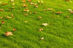 Gelbe und orange gefallene Ahornblätter auf einem hellgrünen Rasen Au lizenzfreie stockfotos